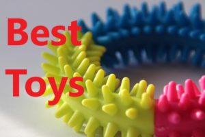 Best toys for Maltese dogs