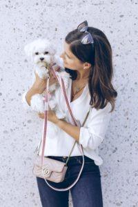 maltese puppy biting