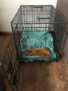 Maltese Dog Crate